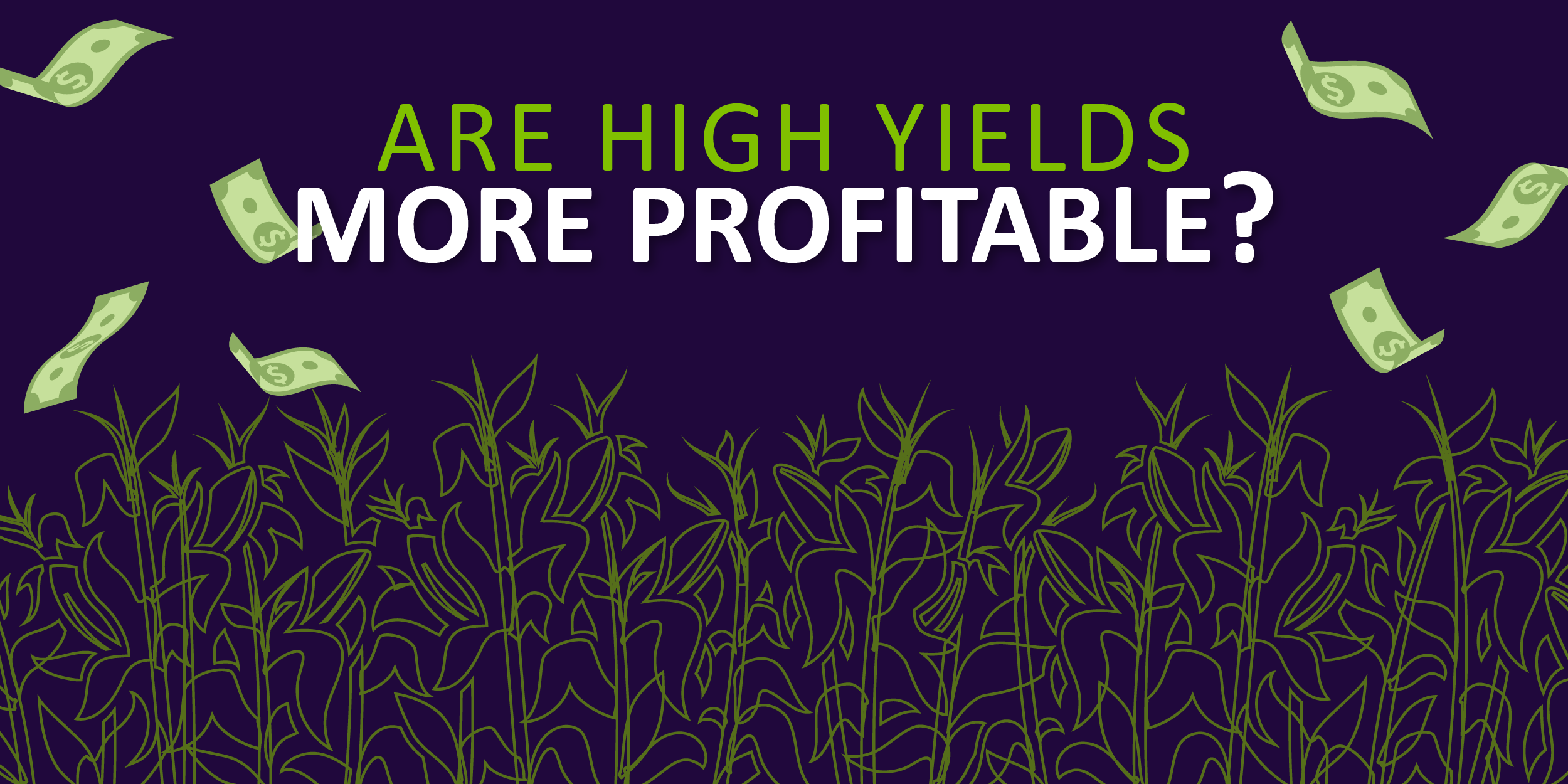 Are High Yields More Profitable?