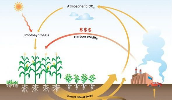 Does Carbon Sequestration Pay?