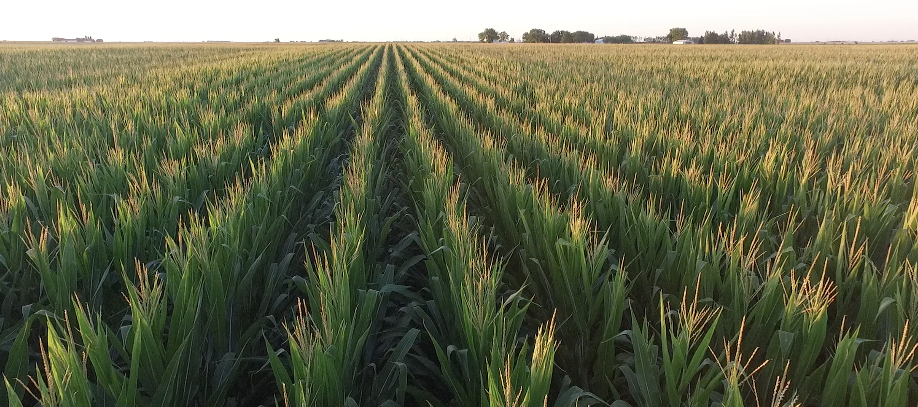 Use Agronomic and Economic Data to Make Management Decisions